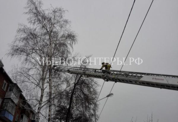 Пожарные спасли кота, который от испуга забрался на высоту пятиэтажного дома