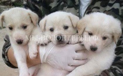 Сильвио Берлускони взял из приюта трех брошенных щенков