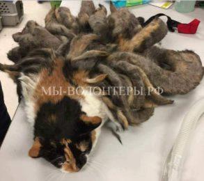 Спасение кошки Хайди с невероятно свалявшейся шерстью