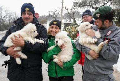 Из отеля, на который обрушилась снежная лавина, спасли трёх щенков