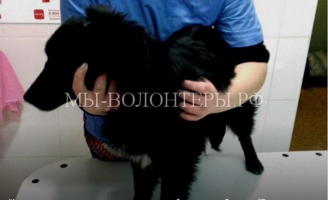 Ветеринары спасли собаку, которую живодеры расстреляли арбалетными стрелами