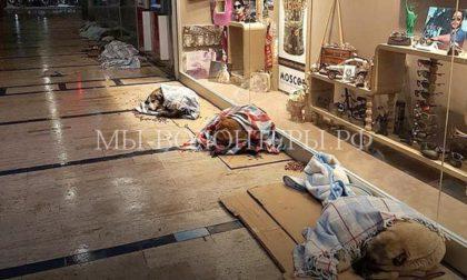 В Стамбуле владельцы магазинов и кафе пускают бездомных собак на ночь, чтобы они не замерзли во время холодов