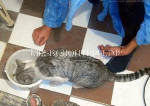 Кот, спасенный из шахты водопроводного стояка, обрел семью