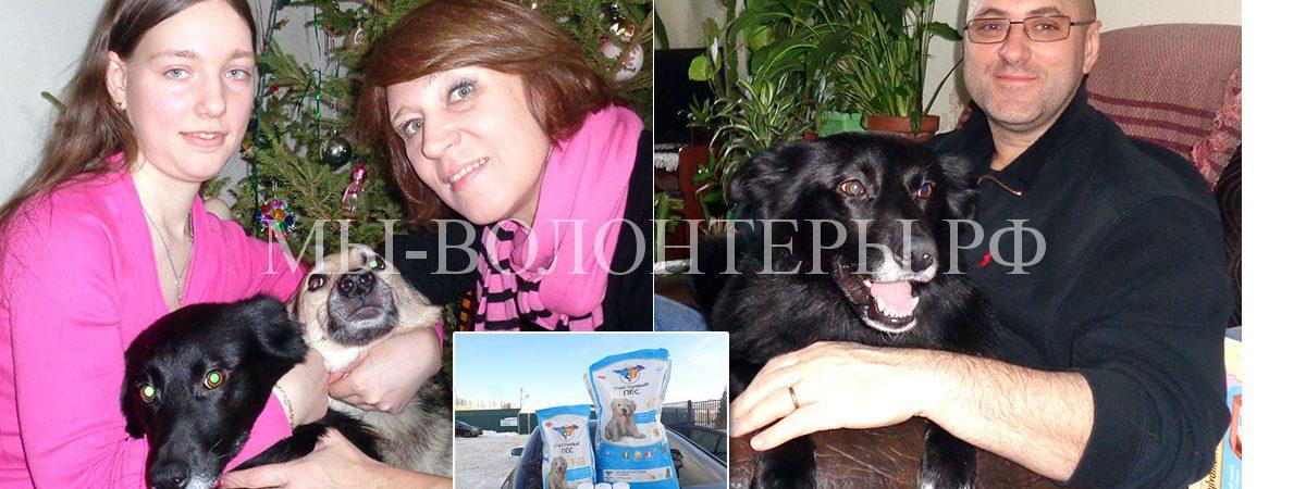Привет из дома  от собаки-ангела Чары и её хозяйки Дианы