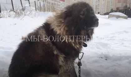 Как спасали от верной смерти 12 сторожевых собак