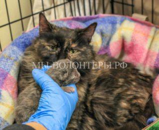 Калида из последних сил спасала жизнь своему единственному выжившему котенку