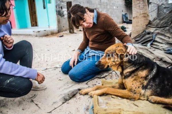 Спасение слепой собаки, живущей на мусорной свалке