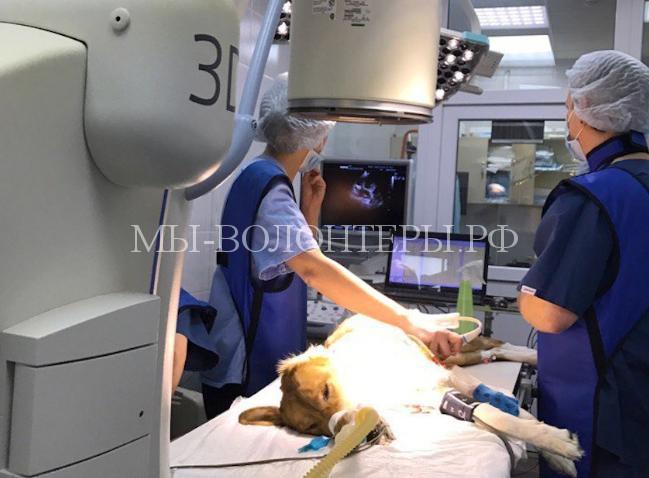 В Новосибирской ветклинике провели уникальную операцию