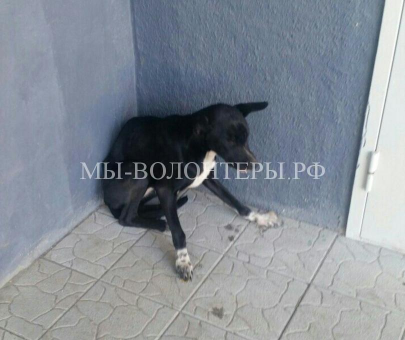 Жители микрорайона объединились, чтобы спасти бездомную собаку, оказавшейся в подъезде многоэтажки