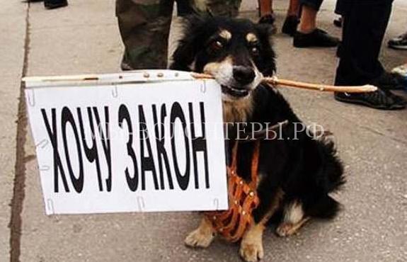 В апреле текущего года в Госдуме рассмотрят законопроект о гуманном отношении к животным