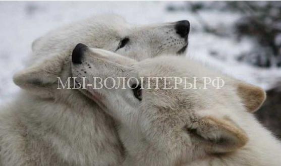 Чувства животных