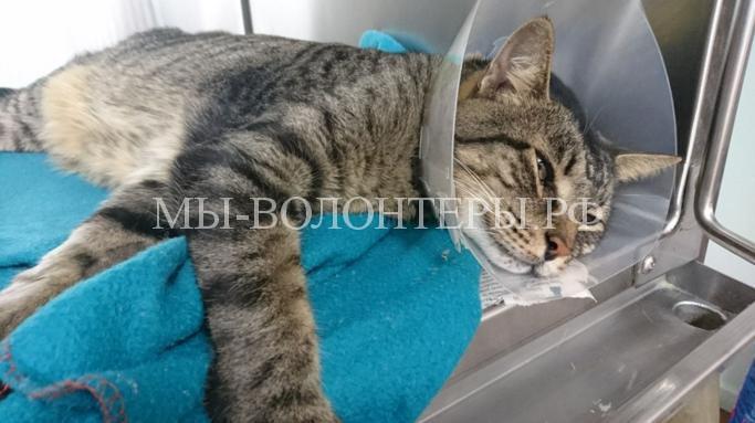 Кот нашел своего хозяина спустя 11 лет после пропажи