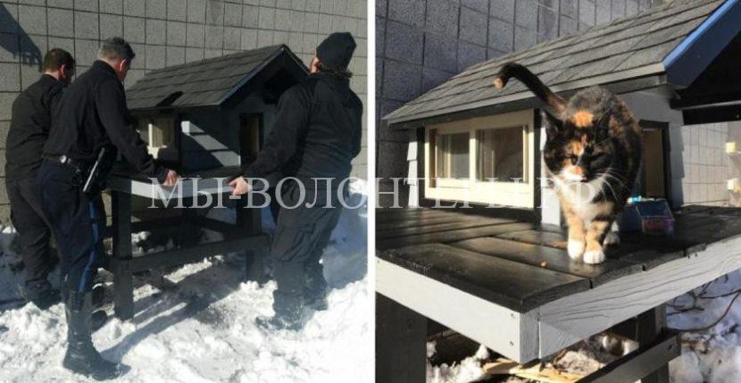Полицейские Бостона взяли под опеку кошку и построили ей домик