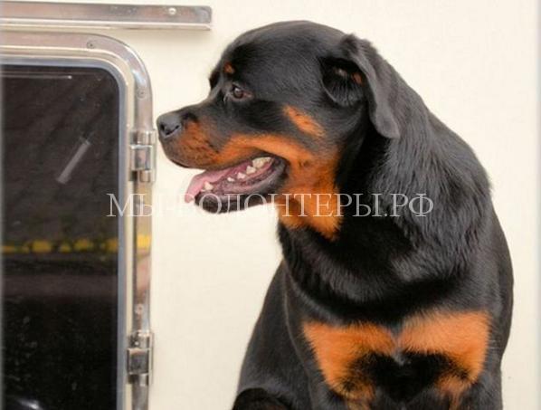 Собака спасла жизнь своему хозяину, открыв дверь медикам скорой помощи