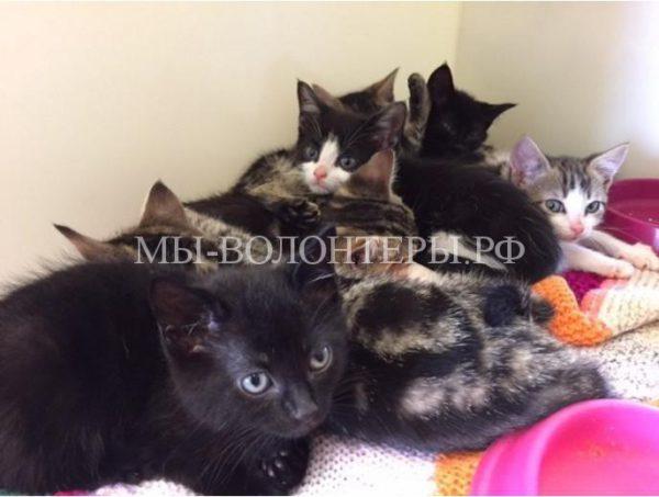 Спасение кошки и восьмерых котят, выброшенных в закрытом чемодане