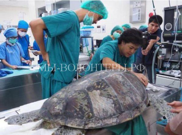 Ветеринары спасли черепаху, извлекли из ее желудка 915 монет