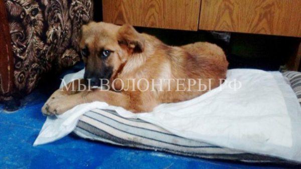 Супружеская пара спугнула живодеров, и спасла щенка от смерти