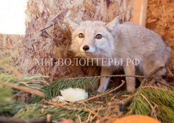 Челябинский зооприют взял под опеку животных из разорившегося Томского приюта
