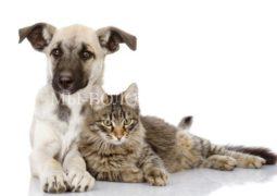 11-12 марта - Выставка приютских животных «Домой!»