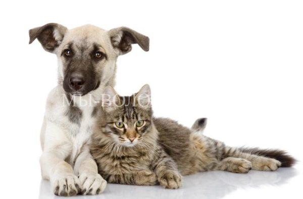11-12 марта — Выставка приютских животных «Домой!»