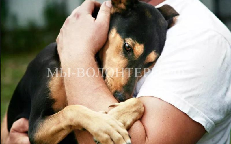 Поправки в законопроект об обращении с животными