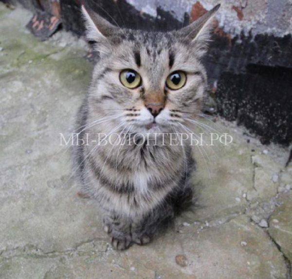 Спасение кота, провалившегося в воздуховод