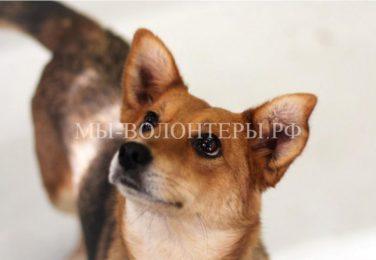 22 и 23 апреля состоится апрельская демонстрация собак и кошек из приютов