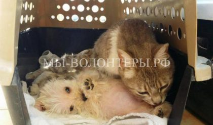 Бездомная кошка, пострадавшая от нападения собак, взяла опеку над одиноким щенком