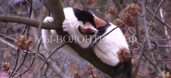 Спасение кошки, три дня просидевшей на дереве на высоте шестого этажа