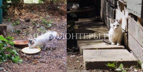 Женщина спасла и забрала в семью бездомного двуногого котенка