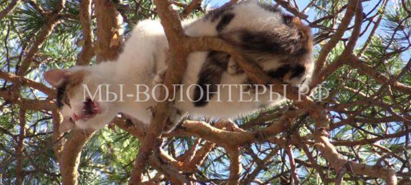 Спасение кошки с 20-метровой сосны