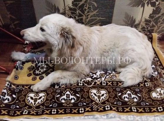 Жители Ростова спасли бездомную собаку, сбитую машиной, и собрали деньги на операцию