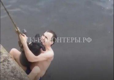 Спасение тонущей дворняги из Воронежского водохранилища