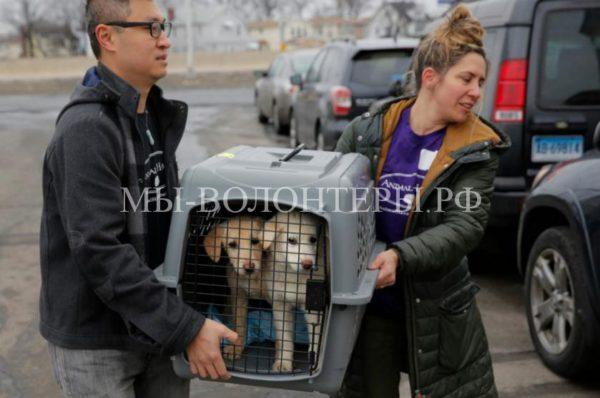 46 собак спасли волонтеры со скотобойни в Южной Корее