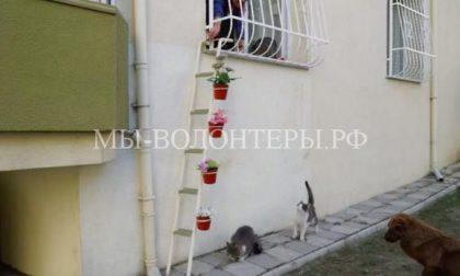 Спасительная лестница для бездомных котов