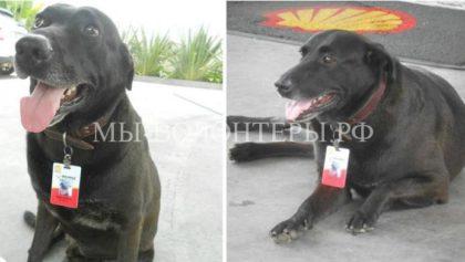 Эти собаки после спасения трудятся вместе со своими хозяевами