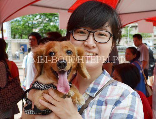 Власти Тайваня ужесточили наказания за жестокое обращение с животными