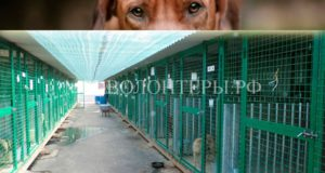 Факты и документы по смерти собаки УМКА из муниципального приюта ЮЗАО
