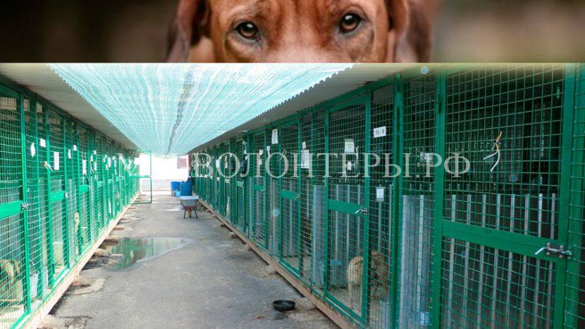 Факты и документы по смерти собаки УМКА из муниципального приюта ЮЗАО «Щербинка»