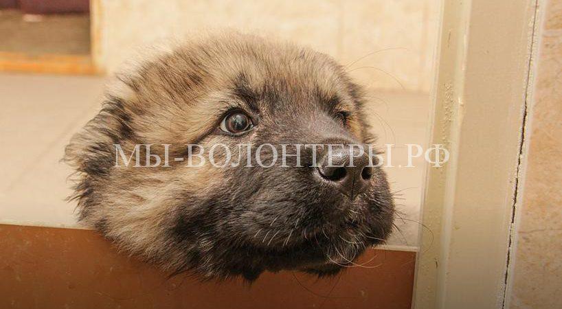 В центре кинологической службы Перми щенки готовятся к суровым будням стражей порядка