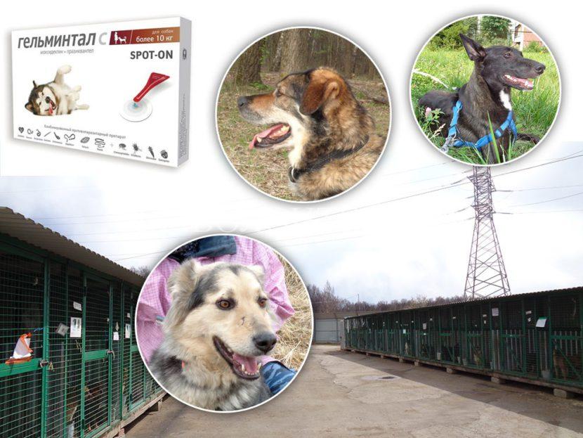 Гельминтал, антигельминтная обработка собак приюта Щербинка перед ежегодной вакцинацией