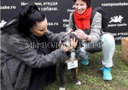 Бездомный щенок Джек стал участником благотворительного проекта и обрел семью