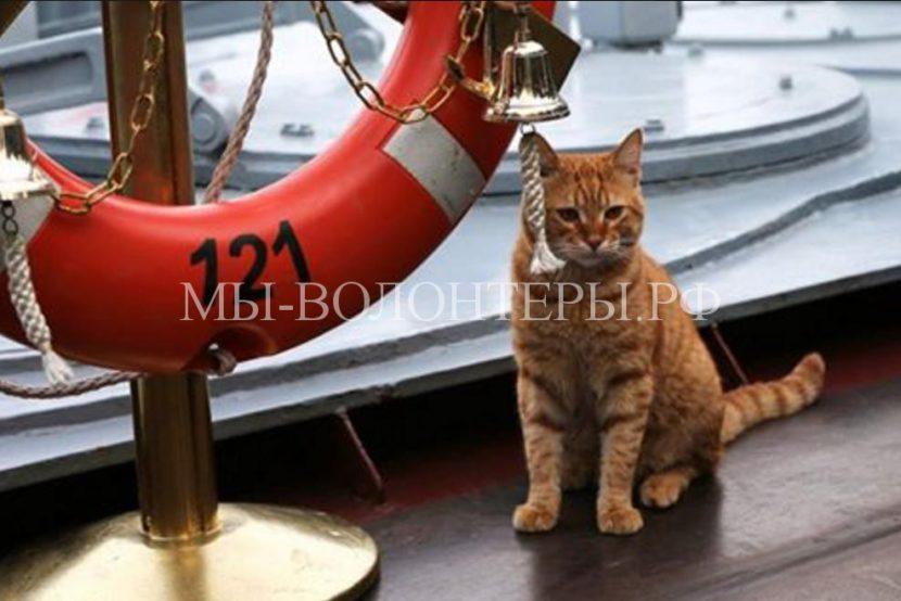Кот Сергей Иванович — любимец экипажа ракетного крейсера «Москва»
