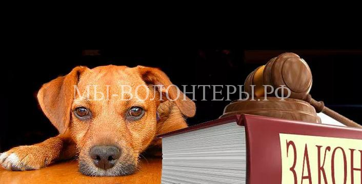 Рассмотрение законопроекта «Об ответственном обращении с животными» перенесено на июнь 2017 г.
