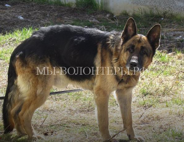 Хозяева нашли свою собаку спустя 7 лет после пропажи