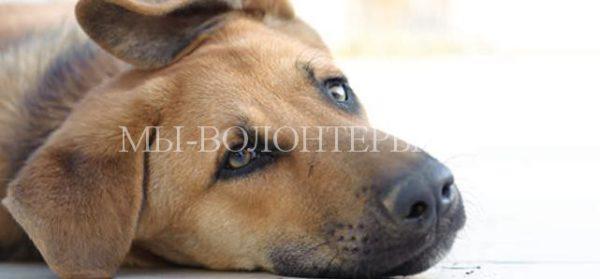 Поведение собаки при возникающих болях