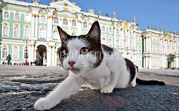 Петербург отмечает День эрмитажных котов