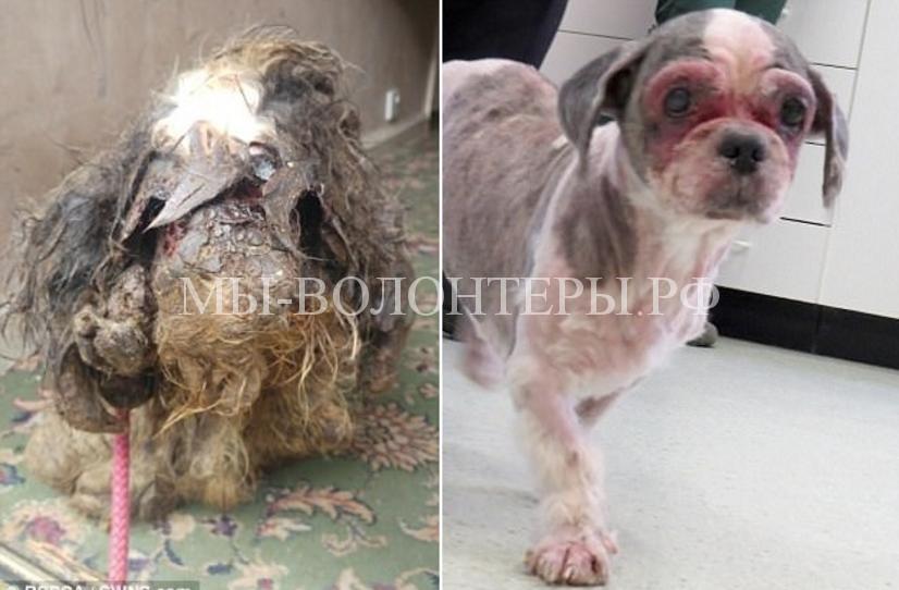 Волонтеры спасли собаку в плачевном состоянии