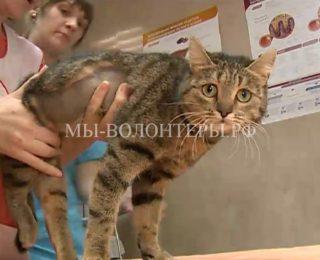 Омские врачи вернули к жизни парализованную кошку