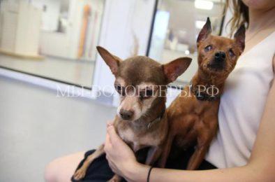 Две брошенные пожилые собаки не могут жить друг без друга